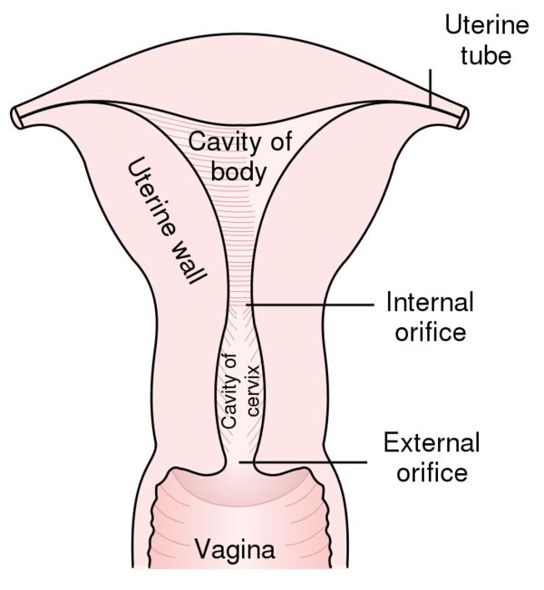 Vaginal opening swelling right after sex