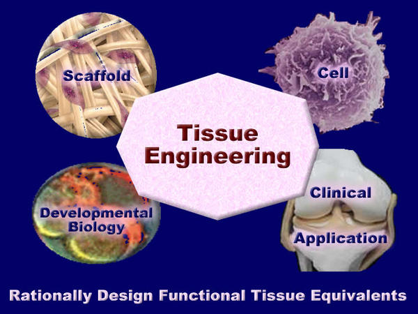 What are the risks on tissue engineering?