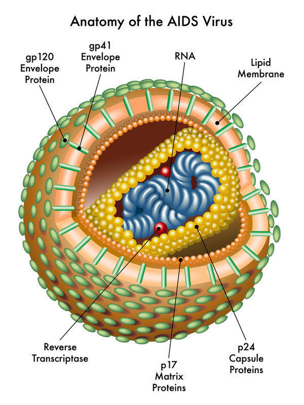 Which is the highest temperature that HIV can survive in?