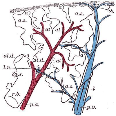Can you tell me what frontoparietal arteriovenous malformation (avm) mean?