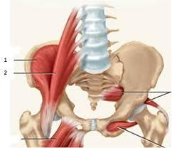 Can the steroid in a L5 s1 injection spread into the psoas muscle which attaches to the last 4 vertebrae causing it to shrink?