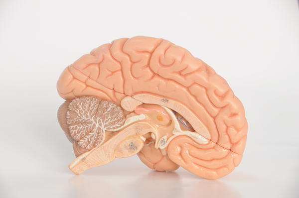 How does long-term (eg 3-yr) opiate use change brain chemistry (assuming used as prescribed)?