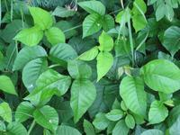 In what way can I treat poison ivy. The itching is killing me?