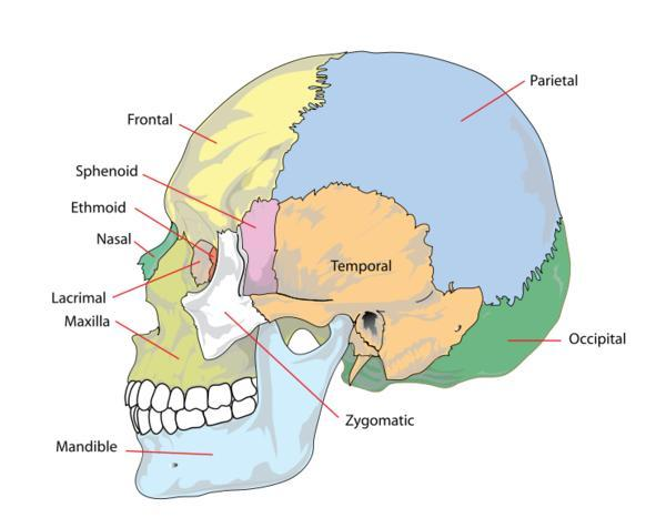 How would a doctor(s) go about treating plagiocephaly in someone who is 17? What options or procedures can be done?