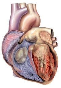 Please explain why does my heart randomly skip beats?