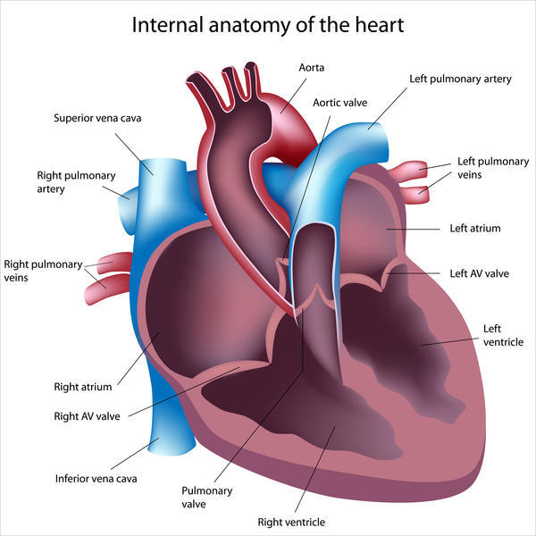 Can shortness of breath be from blockage of heart?