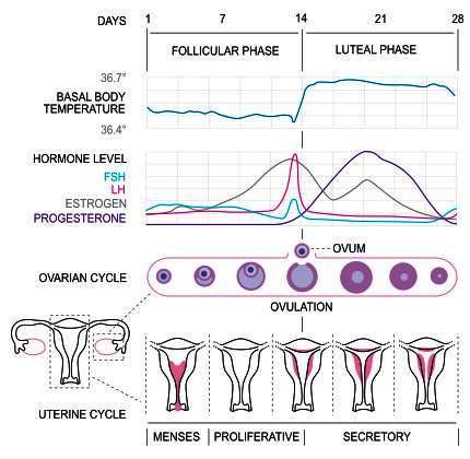 Inside of vagina is dry but feels like period is down but no blood, have history of irregular cycles but were normal for two months in a row, why?