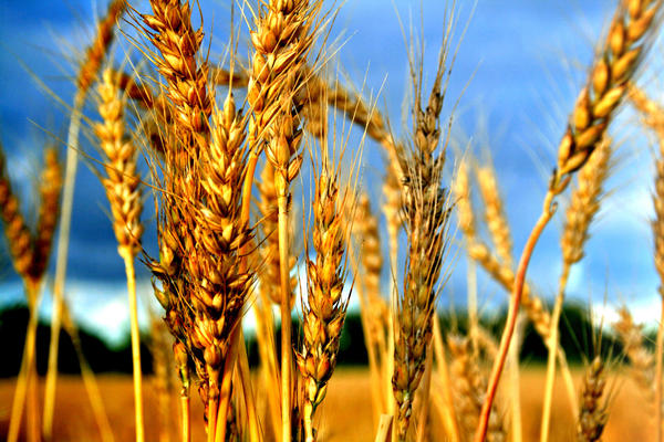 Am I allergic to gluten? Is going on a gluten free diet a valid test?