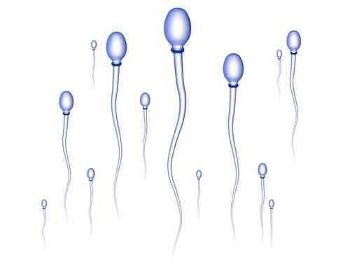 How long sperms can survive inside & outside of underwear?