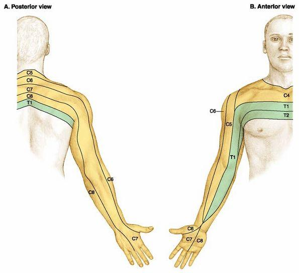 When is it time for someone a visit the doctor with servere neck pain? It started in my neck but now I have it going down my arm the burning is consta