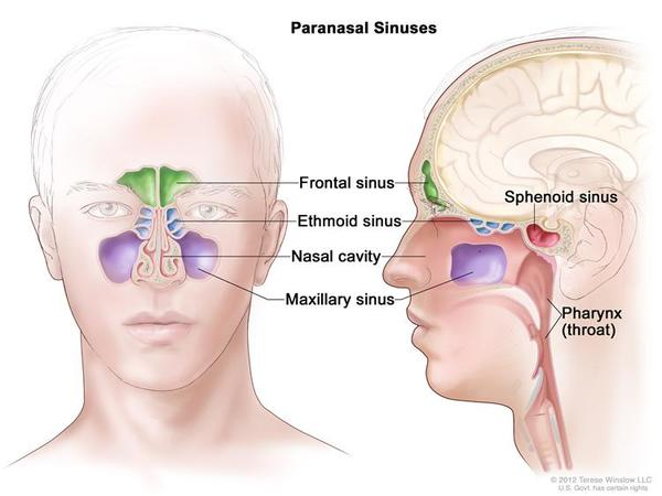 For years the back of my head will swell & fill with fluid within seconds. Very painful. Are the sinus glands leaking and how can this be stopped?