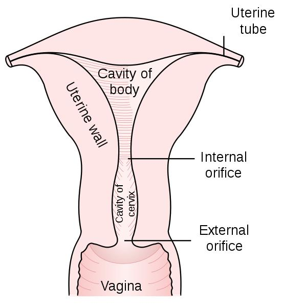 What is the biological difference between vaginal bleeding and your period?