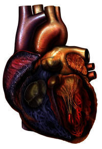 What do you advise for heart palpitations have almost gone away why is this?