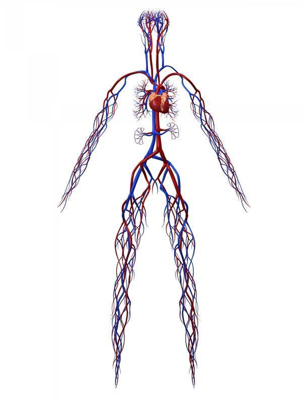 What are peripheral artery disease symptoms?