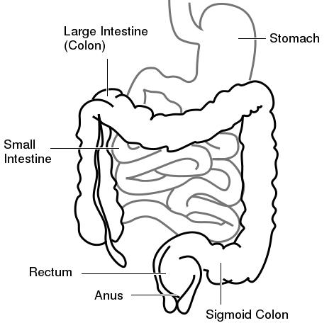 What causes bowel movements in the morning if cycle is three days late?