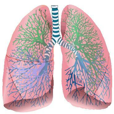 What is the difference between lung nodule on pleural surface vs subpleural?
