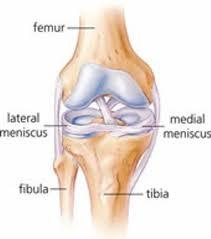 Medial meniscus injury is where?