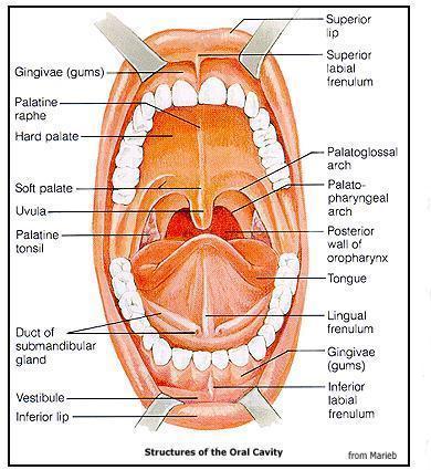 How to treat bad breath.