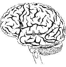 How can I increase brain productivity?