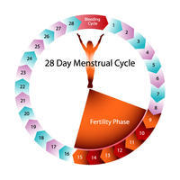 When I ejaculated, a drop of semen fell in her panty don't know where it landed. She washed it after 2min. She ws on 25th day of her cycle. Is preg psibl?