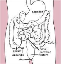 Can anyone tell me what causes the itching of the anus?