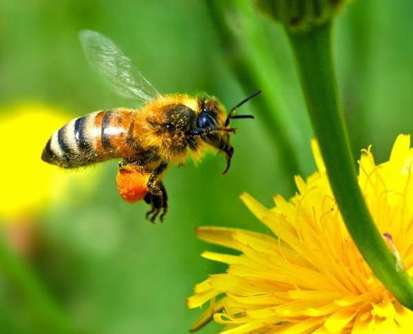 Can my bee allergy be passed to my kids?