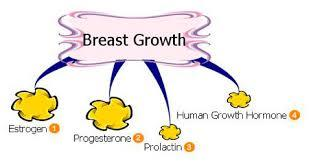 Can it be possible for stress to delay breast growth?