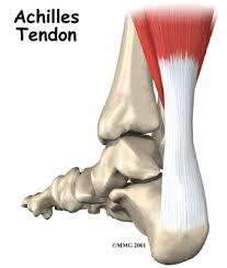 What are the symptoms of a shortened tendon? Can the tendon become thicker or harder?