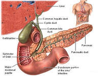 How to know if I have gallbladder inflammation, or gallstones, how much is it even functioning?