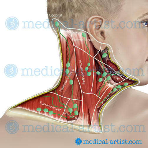 My son has a lump behind his jugular, he has had a real bad cough and cold. Could that be his lymph node?