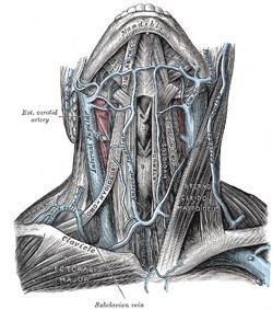 How is vein (jugular) examined?