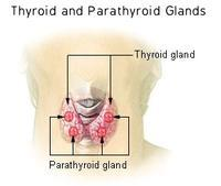 What are the common symptoms of thyroid problems?