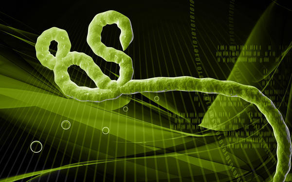 What is the inside of an ebola virus? Why is it so deadly?
