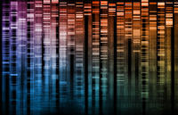 What mutation type causes duchenne muscular dystrophy?