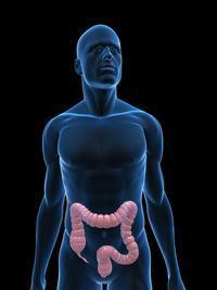 How can probiotics update gut flora?