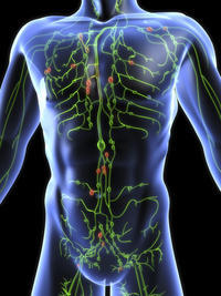 What is the function of the lymphatic system?