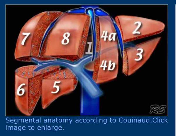 Where is the post hepatic vein?