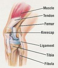 What causes my knee pain?