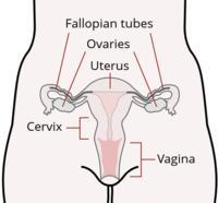 Can I still conceive with little/no cervical mucus? I have a regular 28/29 day cycle and use ovulation predictor kits but see no CM in fertile window