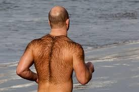 A dr. Said the more thick chest hair is, the more likely you'll go bald. Does this include other body hair? (legs, arms, facial hair, etc.)