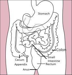 Are gastroenterologists able to remove the appendix?