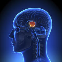 What can cause damage to the cerebellum?