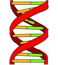 Is bipolar genetic?