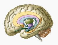 Why is it called a brain freeze when the person's brain doesn't actually get any pain, but it is in the mouth area?