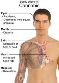 Does Marijuana cause arrhythmia?