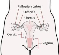 Hi im 3 days late and my cervix is low , hard and closed and i know i cant be pregnant because my husband was out of town? What could it be?