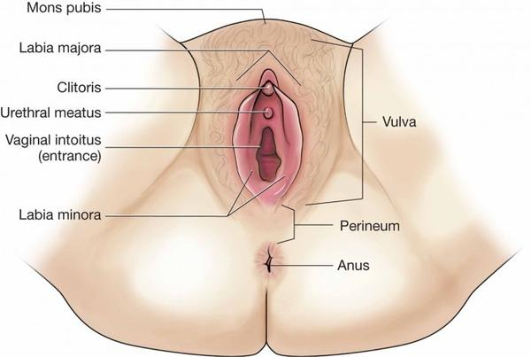 When I have a soft stool I have to wipe perineum as there is feces there, not on vagina but the skin under. Always wipe front to back. Is this normal?