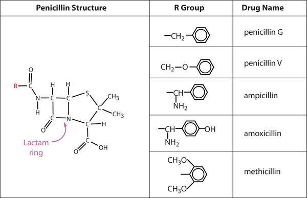 where can i buy amoxicillin 500mg capsules