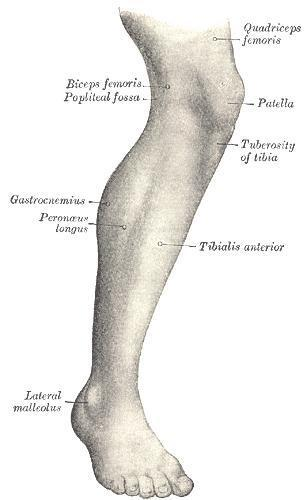 L hip pain that goes down into my leg to ankle, leg feel sore. Lower back hurts on L side. Hip feels like burning pain at times.