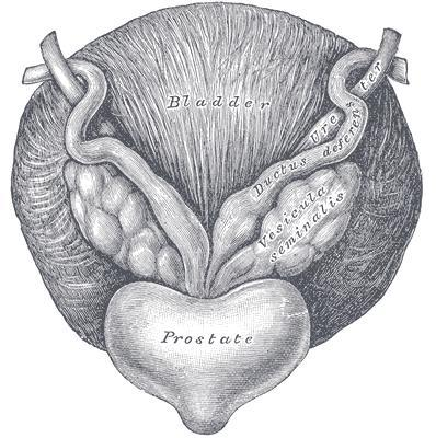 Hi I'm 16 years old .. For around 3 weeks or so I've noticed that my prostate gland gets enlarged and hard when I'm erect..should I be worried?